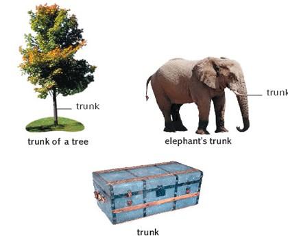 مفهوم های گوناگون واژه ی Trunk